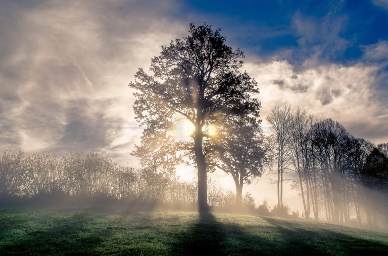 fog-sky-nature-tree-atmosphere-woody-plant-1435821-pxhere.com