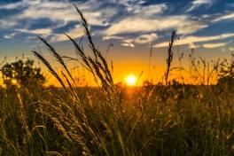 landscape-nature-grass-horizon-cloud-plant-1407864-pxhere.com.jpg