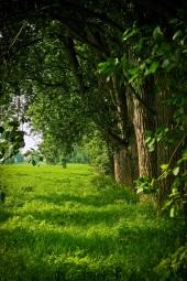 landscape-tree-nature-forest-grass-branch-538675-pxhere.com.jpg